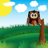 Owl In Nature Stock Photos