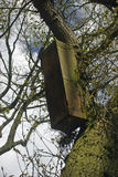 Owl nest box on tree. Owl nest box on oak tree branch attached with wire. Designed for the tawny owl Strix aluco but will be used by other birds. Background of royalty free stock photos