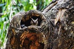 Owl nest on a tree sunny weather owl head stock photos