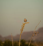 Owl in the New Mexico desert Stock Photography