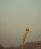 Owl in the New Mexico desert Stock Image