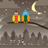 Owl in the night Royalty Free Stock Image