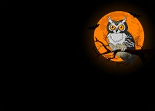 Owl night background Royalty Free Stock Photo