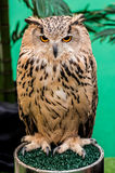 Owl, night bird. In the forest Royalty Free Stock Image