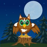 Owl in the night Stock Photo