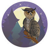 Owl in Night Forest Stock Photography