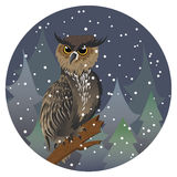 Owl in Night Forest Royalty Free Stock Photo