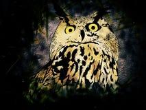 Owl in Night Stock Photos