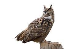 Free Owl On White Stock Photography - 11864112