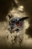 Owl orange eye Stock Photos