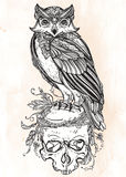 Owl with ornate scull design vintage style. Royalty Free Stock Images