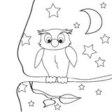 Owl outline coloring night. On a tree royalty free stock photos
