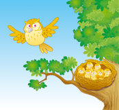 Owl and owlets Stock Image