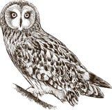 Owl på en förgrena sig stock illustrationer