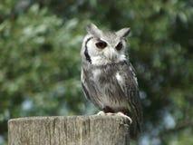 Owl på en posta Arkivfoto