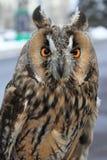 Owl på oskarp bakgrund Arkivbilder