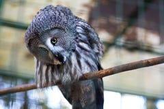 Owl p? en f?rgrena sig royaltyfria foton