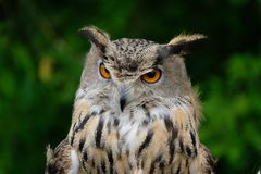 Owl in the Park stock photography