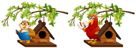 Owl and parrot reading book in birdhouse Stock Photo
