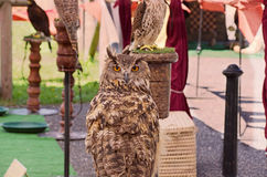 Owl. They pass the inns touching day and a place of rest, crouching in general, and in those that can not be disturbed. The chosen places should also offer stock photos