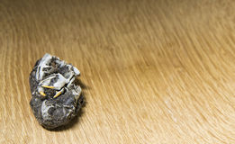 Owl pellet with bones on a wooden background Royalty Free Stock Images