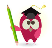 Owl and pencil Stock Image