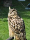 Owl on perch Stock Photos
