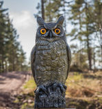 Owl perches on a fence Royalty Free Stock Photos