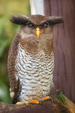 Owl portrait close up of yellow eyes Royalty Free Stock Photo