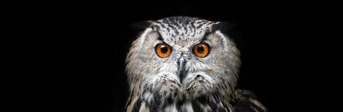 Owl Portrait. Owl on black background Stock Photo