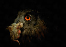 Owl with prey Royalty Free Stock Photography