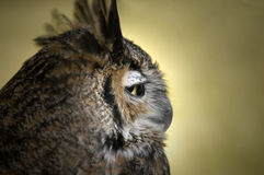 Owl Profile Stock Photos
