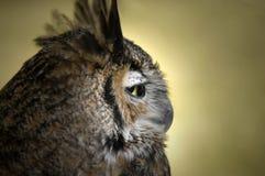 Owl Profile. Sidelong profile shot of an owl Stock Photos