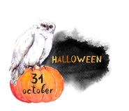 Owl on pumpkin. Halloween watercolor. For card or party inviatation royalty free stock image