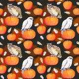 Owl on pumpkin. Halloween watercolor repeating pattern. Owl on pumpkin. Halloween watercolor seamless pattern royalty free stock photo