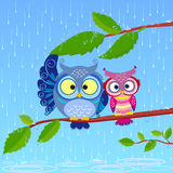 Owl rain. Illustration of funny owls sitting on a branch in the rain Royalty Free Stock Photo