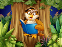 An owl reading a book at the tree Royalty Free Stock Photography