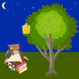 Owl is reading. Owl reading a book under a tree in the night forest, lantern and starry sky vector illustration Stock Image