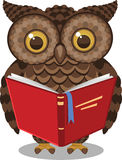 Owl reading book. Wise Intelligent Standing Owl Reading a book  illustration Royalty Free Stock Images