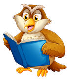 An owl reading Stock Image