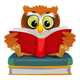Owl reading while sitting on the Books Stock Image