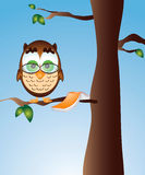 Owl Reading in a Tree. Owl takes a break from reading, while on a tree branch Stock Photography