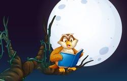 Owl Reading un libro illustrazione vettoriale
