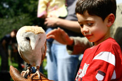 Owl resting on boy's hand Stock Photo