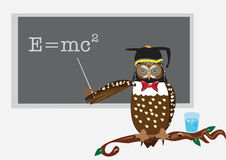 Owl's class Royalty Free Stock Photos