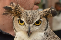 Owl's face Stock Photo