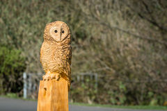Owl Sculpture Royalty Free Stock Images