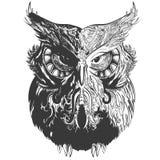 Owl Shadows Black Stock Fotografie