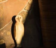 Owl Shadows fotos de stock royalty free