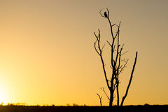 An Owl Silhouetted as the Sun Royalty Free Stock Photos